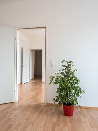 brokerage: new apartment has been embellished with a flower stock. symbol photo for relocation, relocation. no money for furniture because of high rents.