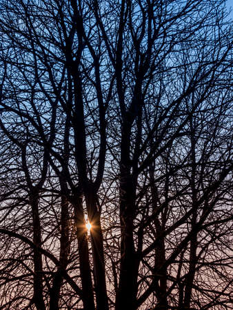 branched: austria, traun. tree in winter. verzwigte branches symbolizing network Stock Photo