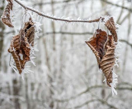 frost winter: in the cold in winter, frost forms