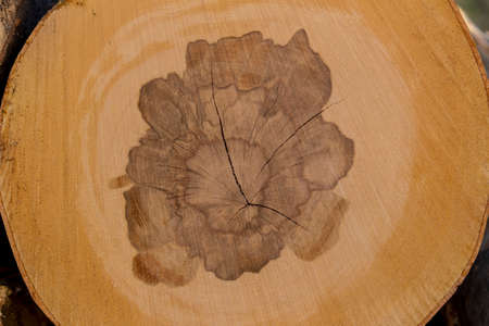 trees in a forest have been recut at woodwork. natural, energy friendly and sustainable heat. Stock Photo