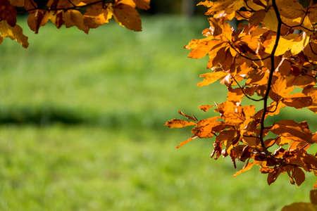lifeline: an autumn leaf on a tree Stock Photo