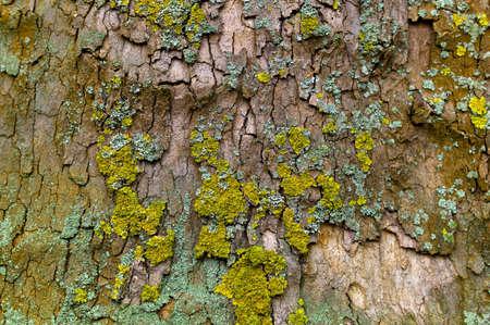economic botany: bark of a tree Stock Photo