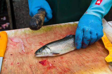 unsaturated: a raw fish is filleted