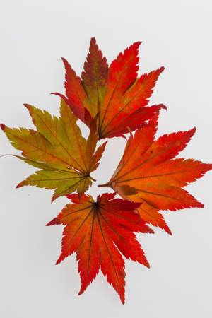 colorful autumn leaves Stock Photo