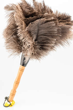 putz: feather duster against white background