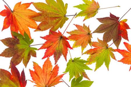 Foglie di autunno colorate Archivio Fotografico - 89675838