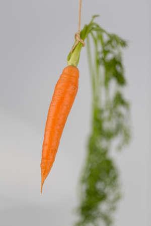 fresh carrots on stick