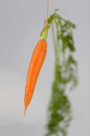 fresh carrots on stick