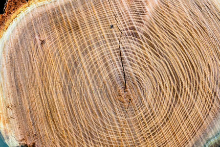 eie cut surface of a tree trunk, symbolizing age and time Stock Photo