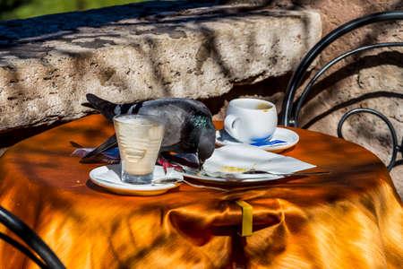 dove in the inn Standard-Bild
