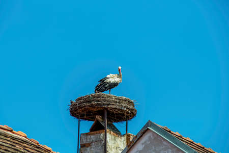 austria, rust. nest of a stork