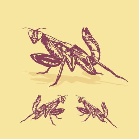 mantis insect illustration vector Vettoriali