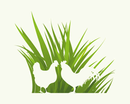 an illustration of a hen and rooster with grass background