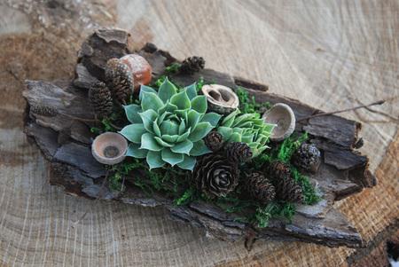 Arrangement of succulents cactus succulents in a planter