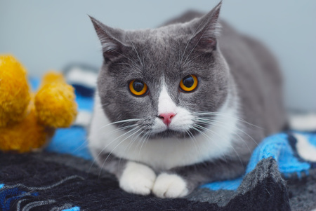 A cute adorable cat sitting relax on Stock Photo