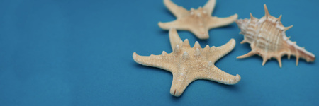 Starfish and Seashells, Maritime nautical decoration over Blue Background with copy space. Banner with Copy Space