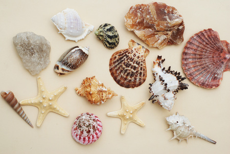 Summer and Vacation concept. mix of Shells and Stones over Ivory Background.