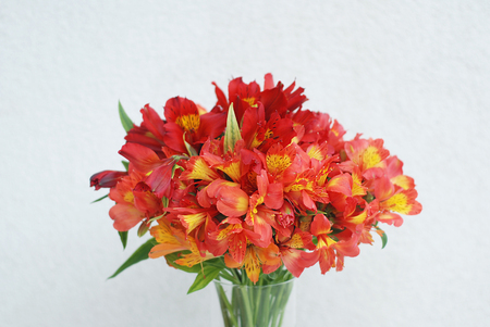Red Orange Beautiful Alstromeria Lily Flower Bouquet Neutral Gray Wall Background. Toned. Spring Summer time. Isolated. Stock Photo