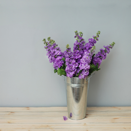 Beautifull Floral Background. Mathiola White Purple Flowers Spring, Easter or Gardening Concept. Warmth.