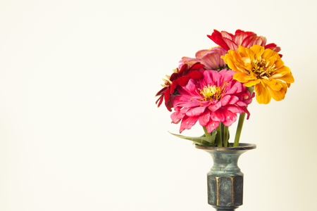 Bouquet of pink zinnia flowers in a vase isolated. Indoor.