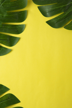 Summer abstract background. Tropical palm leaves with epty space in the middle. flat lay.