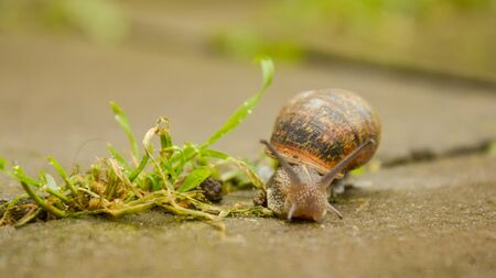 Snail walking in the park ,after raining summer day Фото со стока