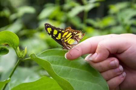 Close up orange butterfly on woman's hand, over green leaf, beautiful summe backgound.