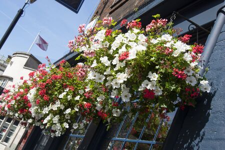 Colorful outdoor flowers in pots on the window. Summer time. London, U.K Stockfoto