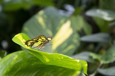 Close up colorful butterfly on green leaf, beautiful summer backgound Фото со стока