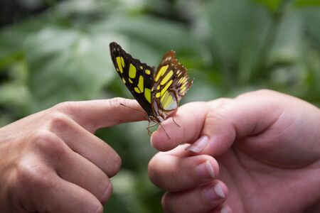 Close up orange butterfly on womans hand, over green leaf, beautiful summe backgound. Фото со стока