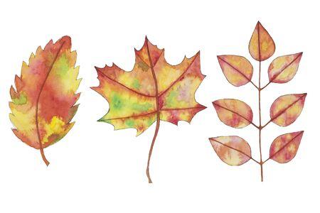 Watercolor fall, autumn yellow, orange leaves, hand drawn design elements on white. Reklamní fotografie
