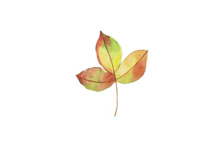 Watercolor fall, autumn yellow, orange leaf, hand drawn design elements on white.