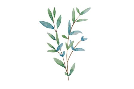 Hand drawn leaves, watercolor illustration. Green and blue spring, easter botanical element isolated.