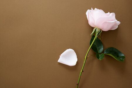 Feminine mock up flat lay. Pink rose on brown background. Copy space. Stock Photo
