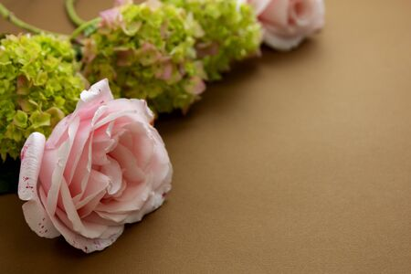 Floral mock up. Pink roses and green hydrangea, brown background with copy space for text.