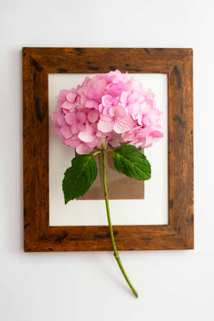Creative abstract flat lay with pink hydrangea flower and wooden frame, on white background