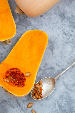 Butternut squash isolated, autumn vegetables for seasonal food. Copy space.