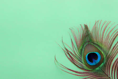 Detail of peacock feather eye on dreen background. Luxury Abstract Texture for Peafowl wallpaper, blue-green color. Indian peafowl extravagant plumage - eye-spotted tail of covert feathers,