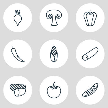 illustration of 9 food icons line style. Editable set of potato, corn, chili and other icon elements.