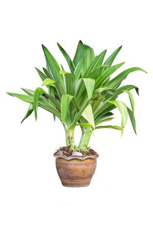 green plants: garden tree isolate