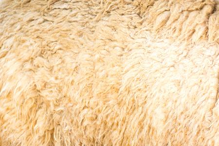 fondo de lana de alpaca Foto de archivo