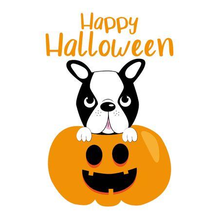 Cute halloween graphics illustration, boston terrier and pumpkin. 일러스트