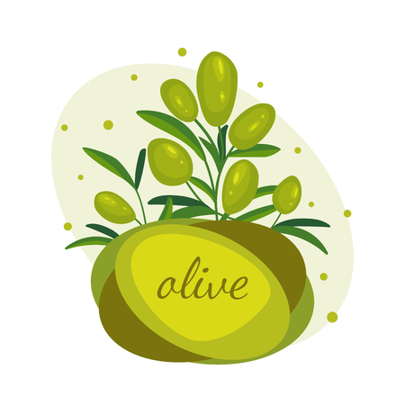 Green olive branches. Banner design for olive oil, natural cosmetics