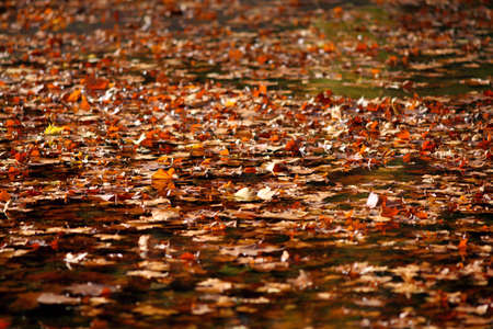 decomposing: Autumn foliage decomposing in a lake Stock Photo