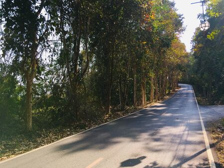Scenery of curve road and sideways the forest have more tree