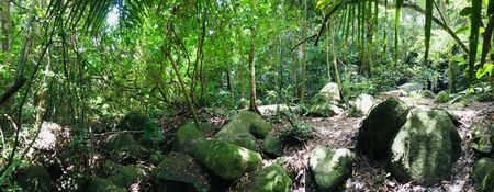 Panorama view of tropical evergreen forest, more green tree and big stone