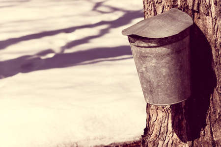 sap: A vintage covered maple syrup sap bucket on a tree against spring snow Stock Photo
