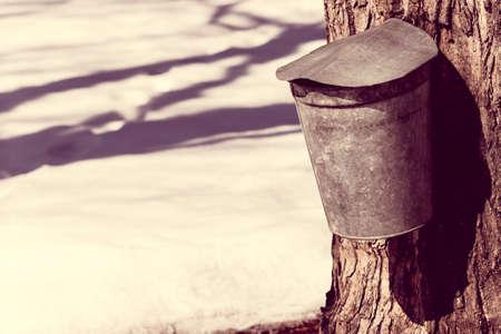 jarabe: Una vendimia cubierta de arce sirope de savia de cubo en un árbol contra la nieve de primavera Foto de archivo