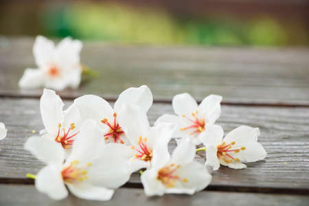 Vernicia fordii flower