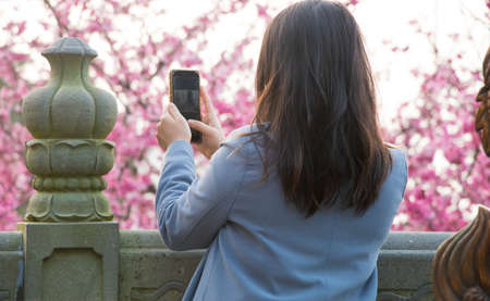 Tamsui Palace, Tamsui Town, New Taipei City-Feb 2,2019: Woman taking the cherry blossom pictures.